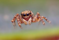 Spider Macro Photography. Almost looks fake, so amazing.