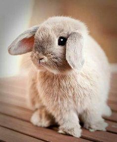 Who's a Happy Bunny? Cute Baby Bunnies, Funny Bunnies, Cute Babies, Cute Bunny Pictures, Animal Pictures, Animal Original, Animals And Pets, Funny Animals, Fluffy Bunny