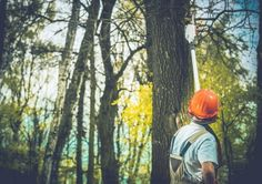 Tree trimming service by Torres Tree Service in Dallas / Fort Worth / Arlington / Irving. Getting your trees trimmed is easy by pros like us. Landscaping Calgary, Emergency Tree Removal, Tree Trimming Service, Tree Specialist, Cut Photo, Parts Of A Plant, Tree Care, Tree Branches, Trees