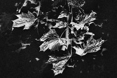autumn in black and white by Halina Larsson on 500px