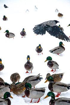 Around The Worlds, Birds, Winter, Animals, Instagram, Winter Time, Animales, Animaux, Bird