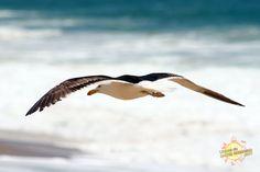 Praia Mole - Foto da Gaivota voando