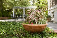 When it comes to containers, bigger is better. Large containers hold more soil and don't dry out as quickly as smaller pots and planters. Plus, the bigger the pot you have the larger variety of flowers you can grow. Here, for example, a jumbo terra-cotta bowl holds a striking assortment of vinca, caladium, and impatiens.