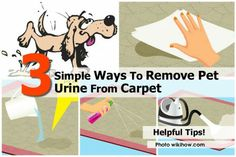 How to Remove Pet Urine from Carpet. Did Fido or Kitty leave you a present again? Maybe you found an old surprise when you went to rearrange the furniture? Regardless of when the deed was done, you can restore your carpet or floor to its. Diy Cleaning Products, Cleaning Solutions, Cleaning Hacks, Cleaning Pet Urine, Home Cleaning Remedies, Silver Lab Puppies, Dog Friends, Simple Way, Clean House