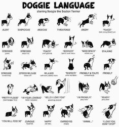 dog language posture. #doglanguage