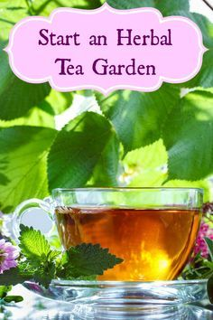 Start an herbal tea garden