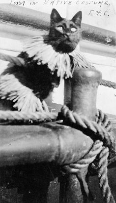 "Tom, ship's cat aboard the iron-hulled Falls Of Clyde, in ""native costume."" Date unknown."