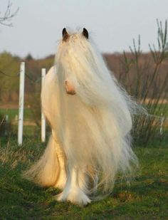 An awesome Gypsy Horse. Big Horses, Cute Horses, Horse Love, Pretty Animals, Cute Little Animals, Animals Beautiful, Majestic Animals, Rare Animals, Animals And Pets
