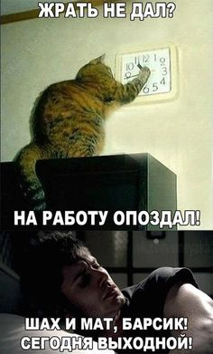 Cat Memes, Funny Memes, Jokes, The Odd 1s Out, Russian Memes, Funny Phone Wallpaper, Choreography Videos, Love Memes, Just Kidding