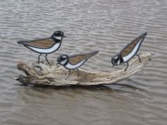 Sandpipers on driftwood