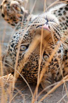Upside down wild thing, beauti wild
