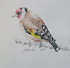 Sketchbook goldfinch by Lisa Toppin.