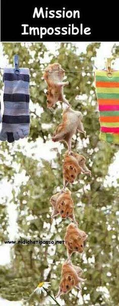 Hopefully they don't fall