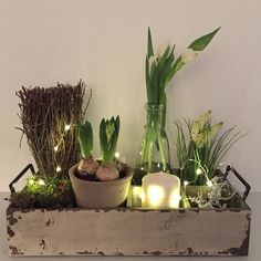 tulips garden care Indoor garden scape - I - Indoor Garden, Indoor Plants, Decoration Plante, Deco Floral, Garden Care, Easter Crafts, Spring Flowers, Planting Flowers, Tulips Garden