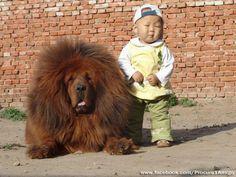 Big Dog and Little Boy......