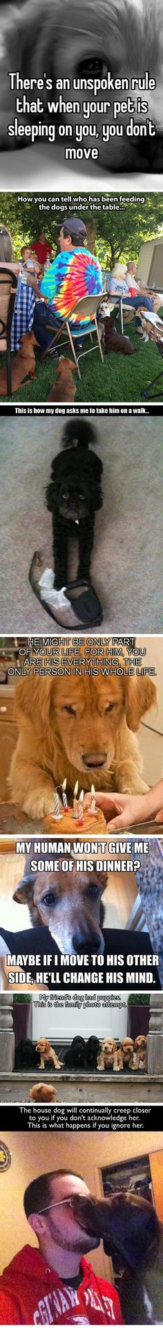 If you own a dog...all of them SO True::
