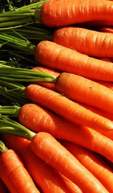 People wonder, will eating too many carrots change the color of your skin? The surprising fact is eating too many carrots, or other foods high in beta-carotene, can cause a yellowish discoloration of the skin, according to the Dermatology Clinic at UAMS. Learn more: www.uamshealth.com
