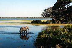 Majestic elephant crossing a channel at Jao Camp #Okavango #safari
