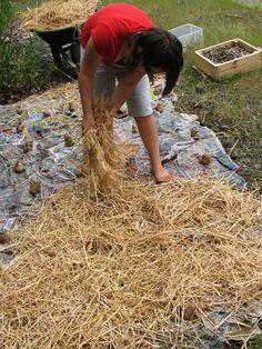 Growing Potatoes In Straw - http://www.ecosnippets.com/gardening/growing-potatoes-in-straw/