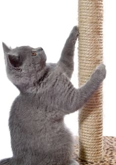 Research Before Declawing Cat #cats #cat care