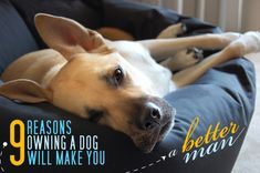9 Reasons Owning a Dog Will Make You A Better Man - Primer