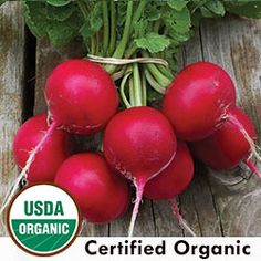 Radish, Holmes' Royal Red Organic   Seed Savers Exchange