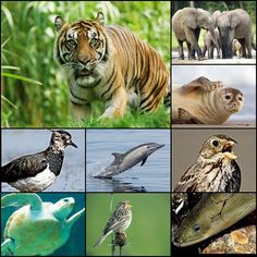 For the past 40 years, disappeared half wild animals