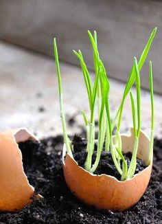 Or in an eggshell. | 30 Insanely Clever Gardening Tricks