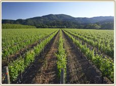 BV, Rutherford, CA....so want to go to wine country in CA!