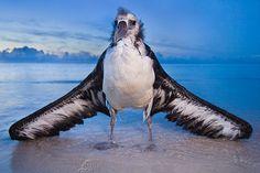 Buy Fine Art Prints by National Geographic photographer Frans Lanting Beautiful Creatures, Animals Beautiful, Frans Lanting, National Geographic Photographers, Big Bird, Sea Birds, Sheltie, Bird Watching, Amazing
