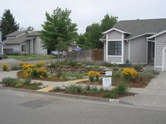 Drought Tolerant Landscaping - mediterranean - landscape - san francisco - by Firma Design Group