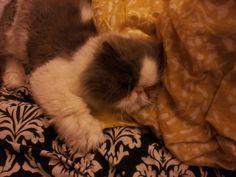 Sleepy Max