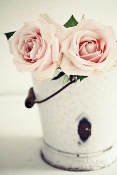 バケツの白いペンキの質感とピンクの薔薇がお似合い。