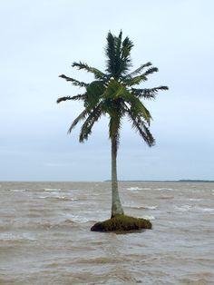 Lonely Palmtree In Awas Pearl Lagoon Nicaragua