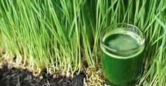 Viral Alternative News: Wheatgrass Turns Gray Hair Back to it's Natural Color and Can Reverse the Aging Process!