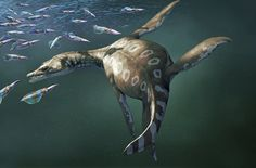 """Art illustration - Aquatic Reptile - Rhomaleosaurus: (""""strong lizard"""") is an extinct genus of romaleosáurido pliosauroide, who lived in the Lower Jurassic (Toarcian, between 183 to 175,600,000 years ago), known Northamptonshire and Yorkshire in the UK. It could grow to about 7 meters long. It was a carnivorous marine reptile. Like other Pliosaurs, Rhomaleosaurus fed on ichthyosaurs, ammonites and other plesiosaurs."""