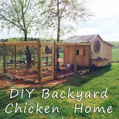 Tips and tricks for creating your own chicken coop and run in your backyard! DIY helpful hints and 3 different approaches to raising your chickens.