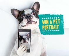 Help me win a pet portrait by voting for my pet.