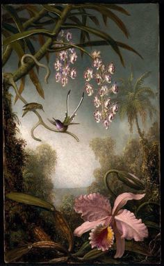 Paintings from american painter Martin Johnson Heade // Orchids (orchidée, orquidea) and hummingbirds ( colibris, picaflor ) fr. Botanical Illustration, Botanical Prints, Martin Johnson Heade, Kunsthistorisches Museum, Hudson River School, Oil Painting Reproductions, Arte Floral, Museum Of Fine Arts, Animal Paintings