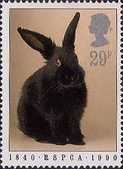RSPCA 29p Stamp (1990) Rabbit_ This looks just like one of my bunnies!