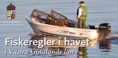 Skal du fiske sjøørret i Sverige? – Rosareke Baseball Cards, Sports, Hs Sports, Sport