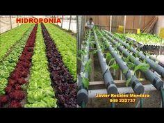 HIDROPONIA CULTIVO DE LECHUGAS Hydroponic Gardening, Hydroponics, Container Gardening, Fruit Garden, Edible Garden, Commercial Aquaponics, Types Of Farming, Lettuce, Agriculture