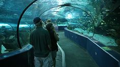 Ripley's Aquarium, Myrtle Beach, SC - the underwater tunnel is literally one of the coolest things.
