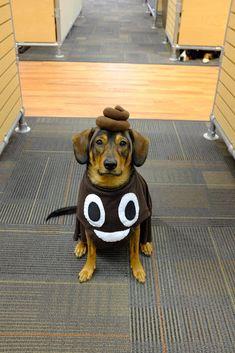 The Poop Emoji. The best dog halloween costume i've done yet!
