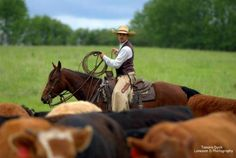 Well Broke Ranch Gelding for Sale - For more information click on the image or see ad # 35014 on www.RanchWorldAds.com