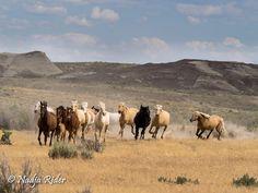 Sand Wash Basin  Corona moving his band along! Photo taken 7/17/15 by Nadja Rider.