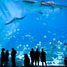 Photo about ATLANTA, GEORGIA-JUNE Unidentified people watch a whale shark swim by at the Georgia Aquarium in Atlanta, Georgia. Image of silhouette, shark, america - 56493829 Best Family Vacation Spots, Best Vacations, Family Travel, Family Trips, Vacation Ideas, Vacation Places, Georgia Aquarium, Cheap Weekend Getaways, Weekend Trips