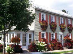 Colorful Window Boxes and Front Yard