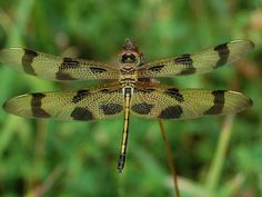 Dragonfly, photo taken 07-19-14 with Nikon D-40, cropped on camera TK