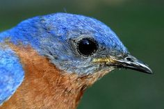 It's Not Too Late For Nest Boxes: Bluebirds, etc.